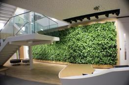 LivePanel, living wall