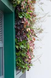 LivePanel - Sustainable Plant Wall - Mobilane UK