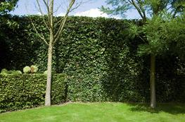 Mobilane Green Screen - Instant Green Screen - Mobilane UK
