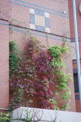 Green Walls - MMA Architectural Systems Ltd