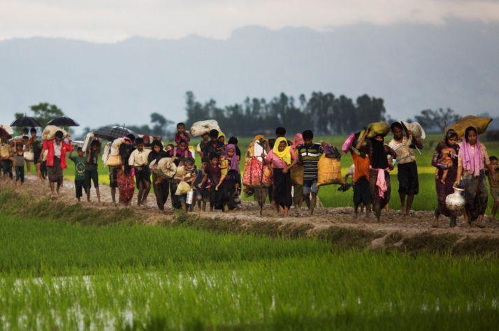 Rohingya fleeing violence in Myanmar crossing into Bangladesh.