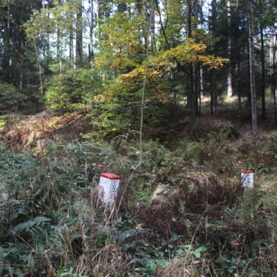 border-forest.jpg