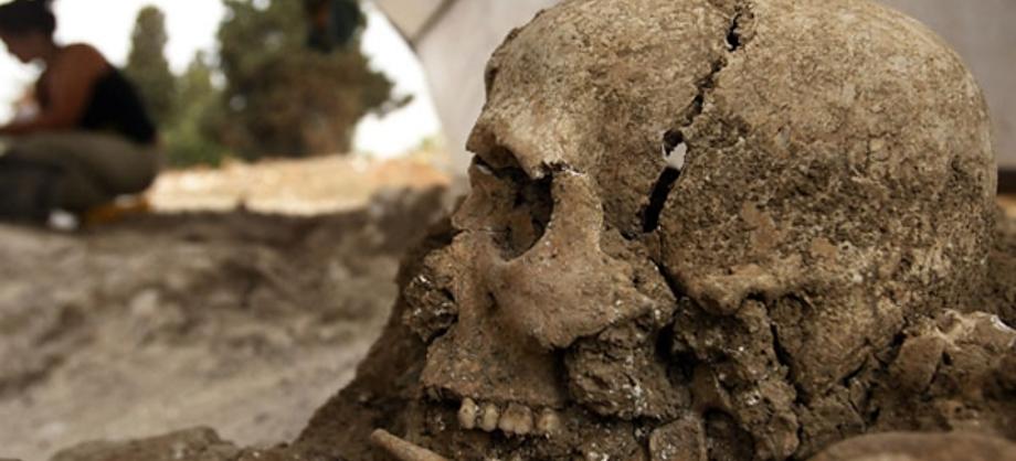 Ciencia: Brucella melitensis: diagnostican enfermedad de un fallecido hace más de 700 años