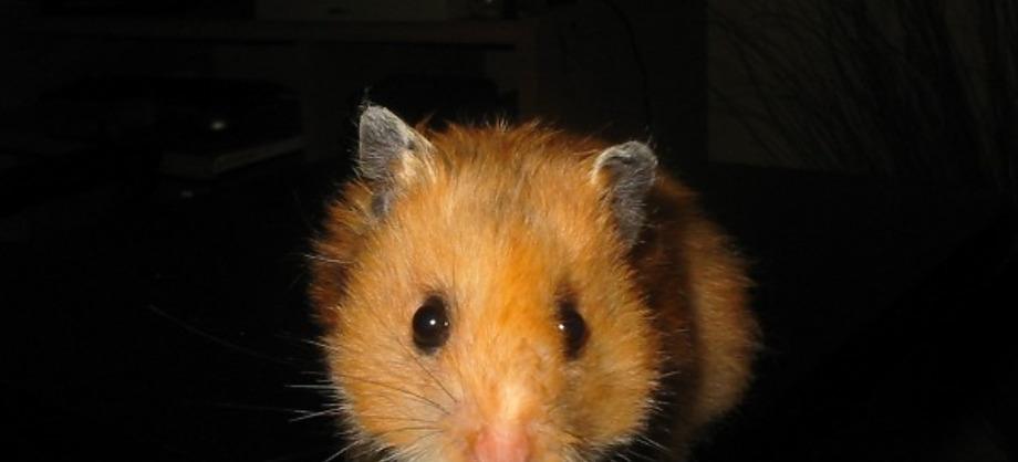 Ciencia: Los animales más pequeños del mundo
