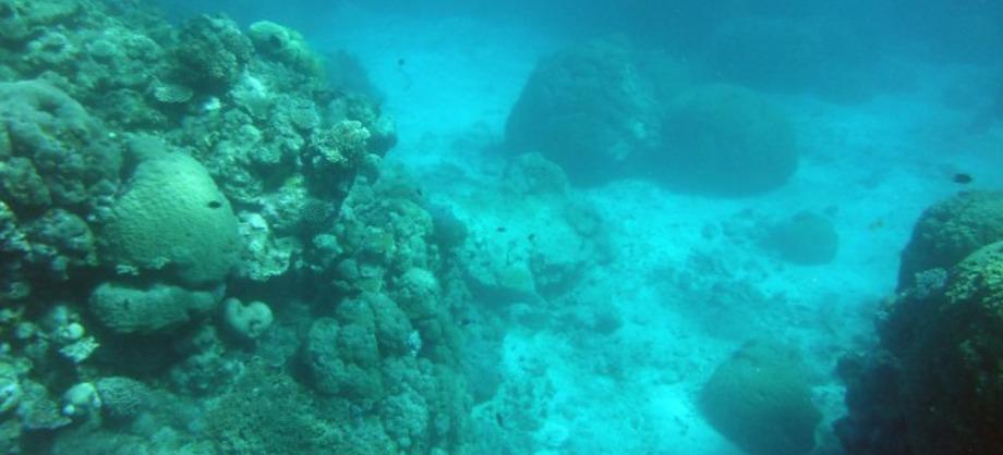 Ciencia: Descubren hongo en el Mar Muerto que podría acabar con el hambre en el mundo