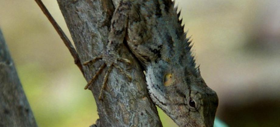 Ciencia: Nuevas especies de reptiles en el Caribe