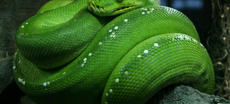Ciencia: Los animales más venenosos