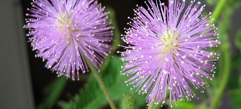 Ciencia: Las flores más raras del mundo