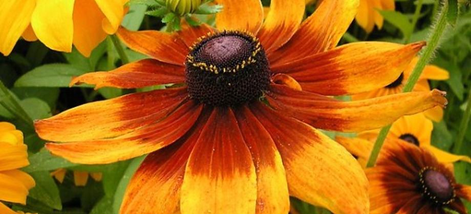 Ciencia: Las flores más hermosas del mundo, cinco ejemplos