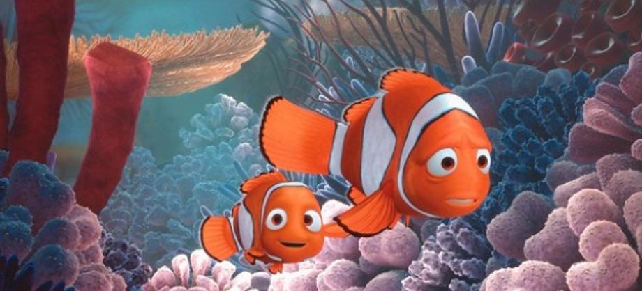 Ciencia: Los bebés de los peces payaso pueden viajar en busca de un hogar