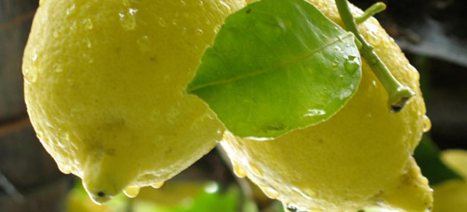 Familia y Hogar: Tres razones para usar limón y estar más bella