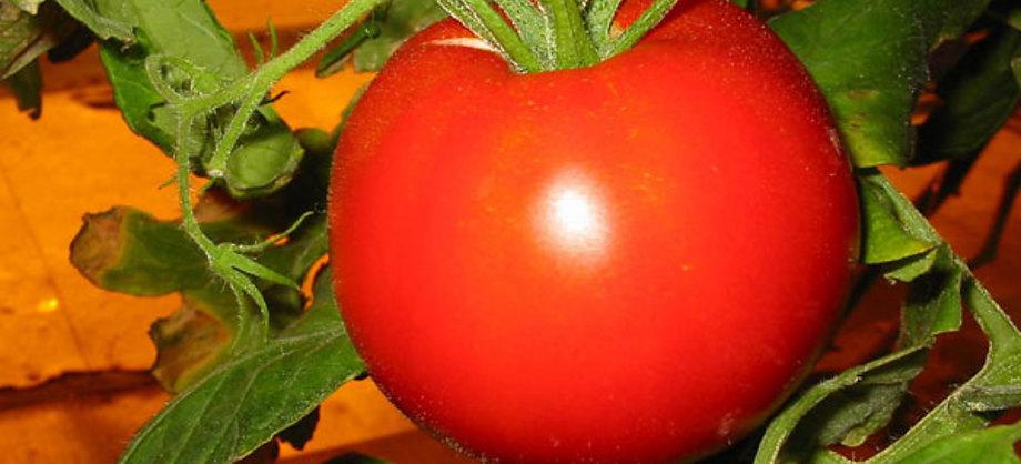 Gastronomía y Recetas: Beneficios del tomate