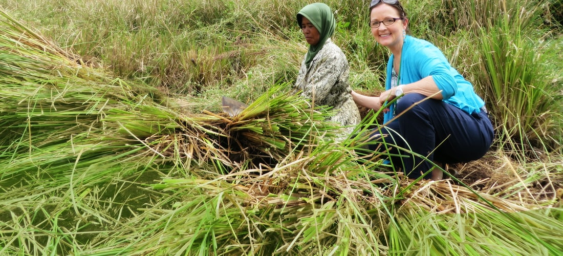 Ecología: Agricultura Orgánica: una Solución Económica y Ecológica