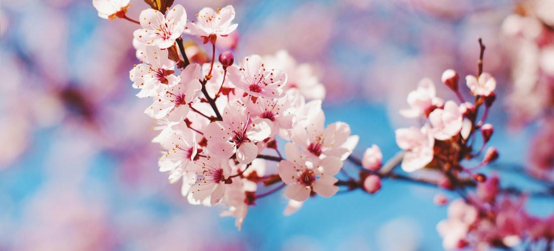 Clima: La Primavera la Sangre Altera