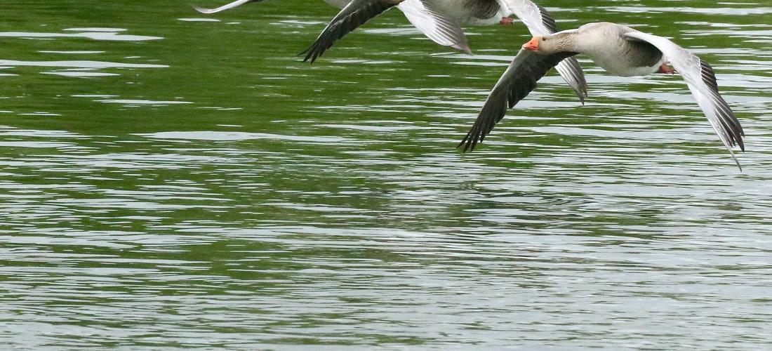 Cuidado de Animales: Birdsystem Ayuda a Luchar Con las Aves