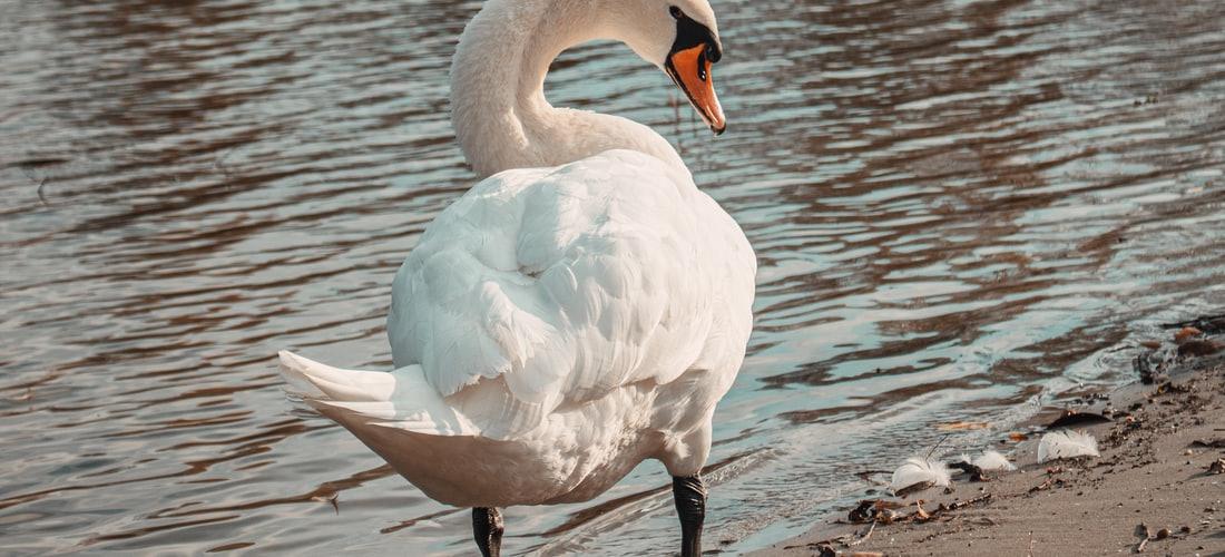 Cuidado de Animales: Sociedad para la Prevención de la Crueldad Hacia los Animales Apoya Birdsystem