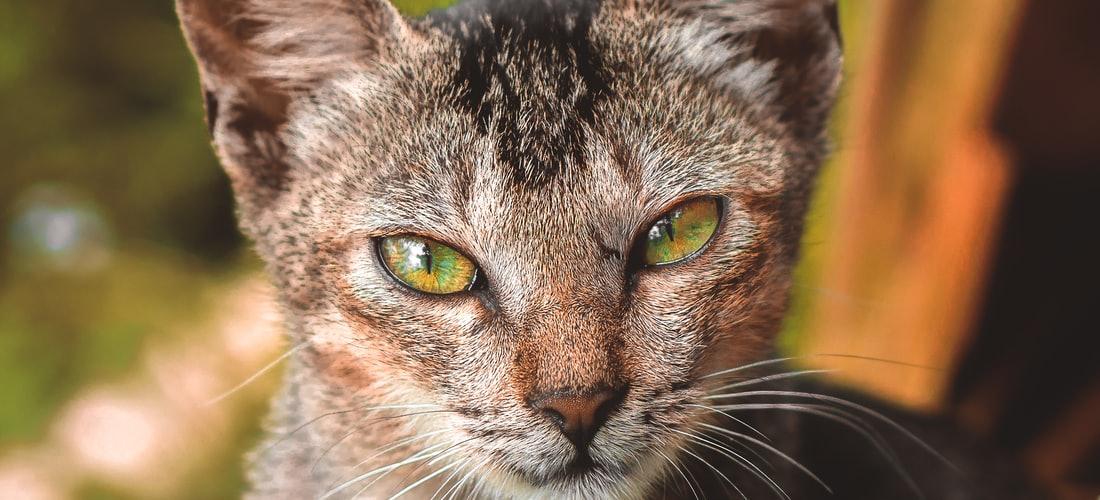 Cuidado de Animales: Consejos para Tener en Cuenta Cuando Adoptemos una Mascota