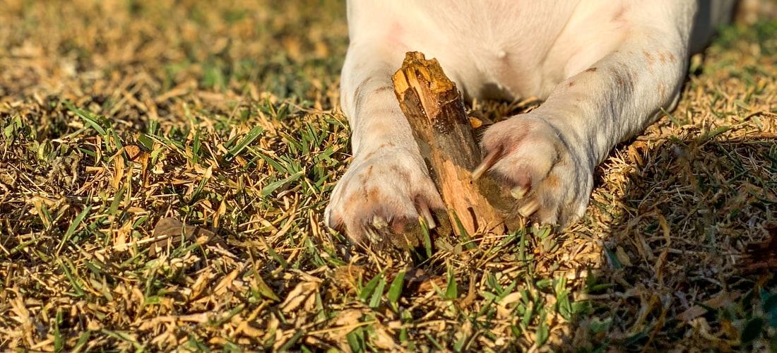 Derechos Animales: Alergia Al Polen y Mascotas
