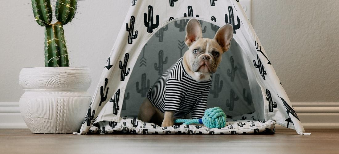 Cuidado de Animales: ¿Cómo Hacer Ropa para Perros en Casa?