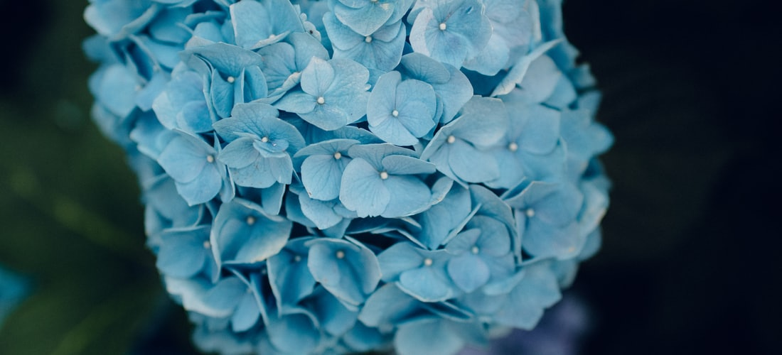 Cultura Nacional: Ya Se Viene la Feria de Flores de Medellín