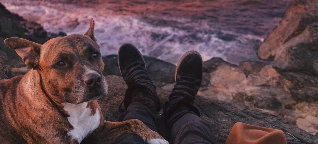 Cuidado de Animales: Descubre Como Amaestrar a un Perro