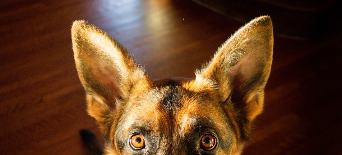 Cuidado de Animales: Los 5 Secretos Sobre el Adiestramiento para Perros