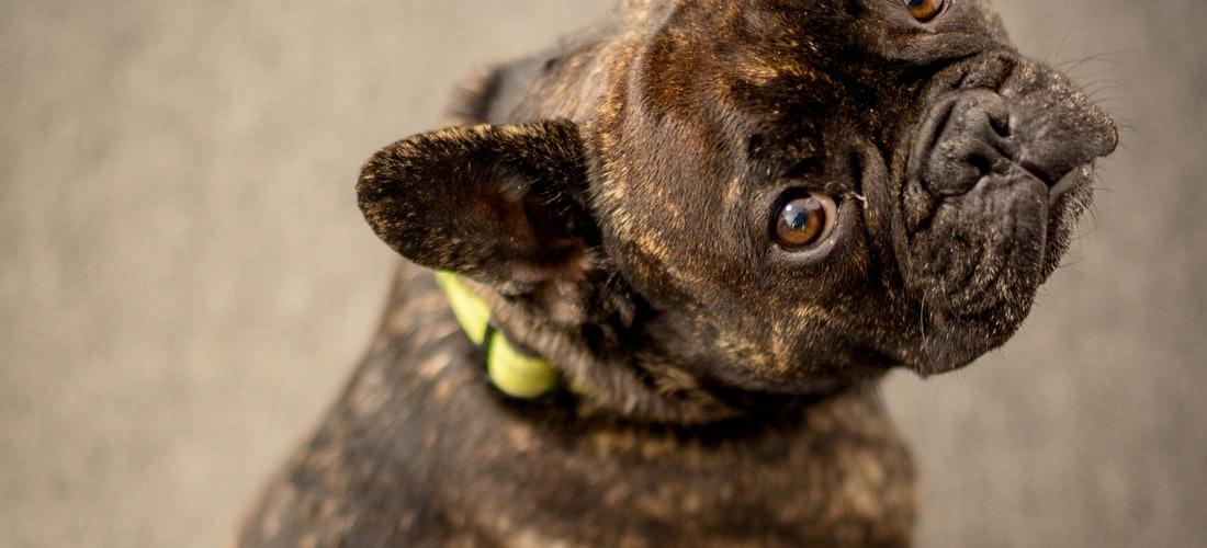Cuidado de Animales: Adiestramiento Canino Madrid