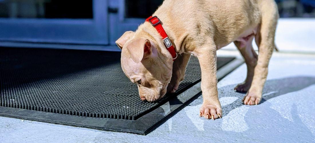 Biología Veterinaria: Domesticación del Perro