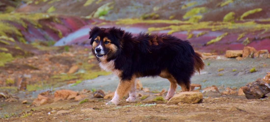 Convivencia con Mascotas: Como Educar a un Perro de la Manera Correcta - Algunos Consejos Eficaces