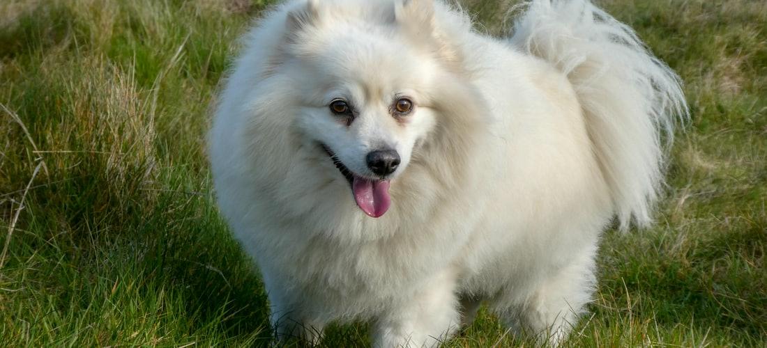 Cuidado de Animales: Razas de Perros