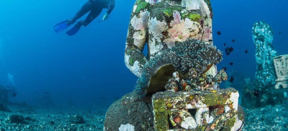 Deportes Extremos: Atreverse a Vivir de Increíble Experiencia de Bucear Con Tiburones
