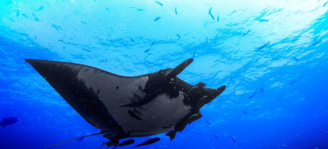 Otros Deportes: La Increíble Experiencia de Bucear Con Tiburones