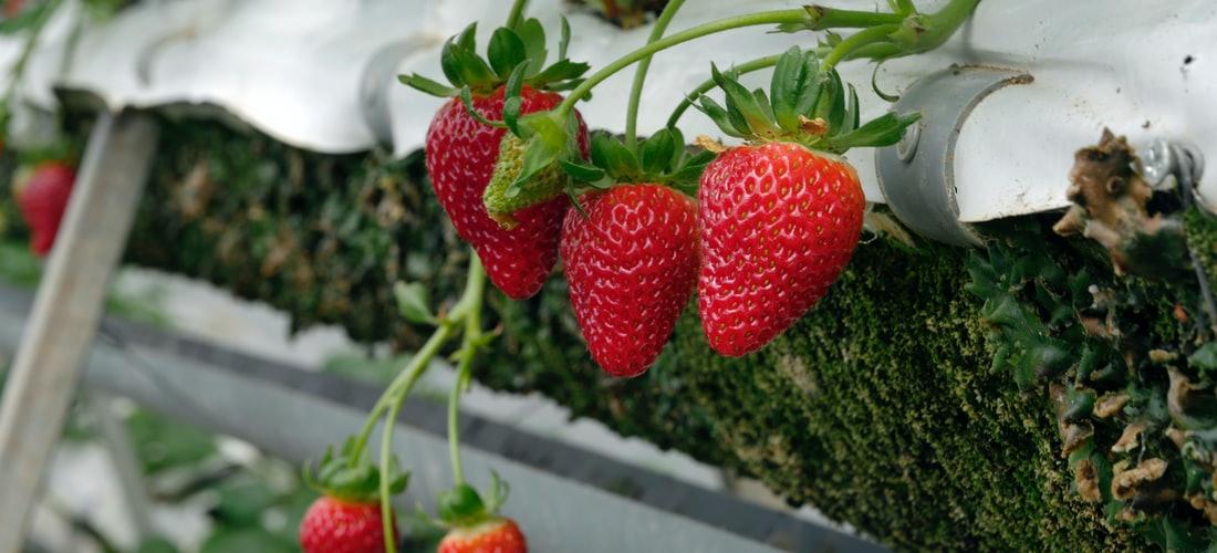 Nutrición: Opciones Alimenticias para Ganar Peso