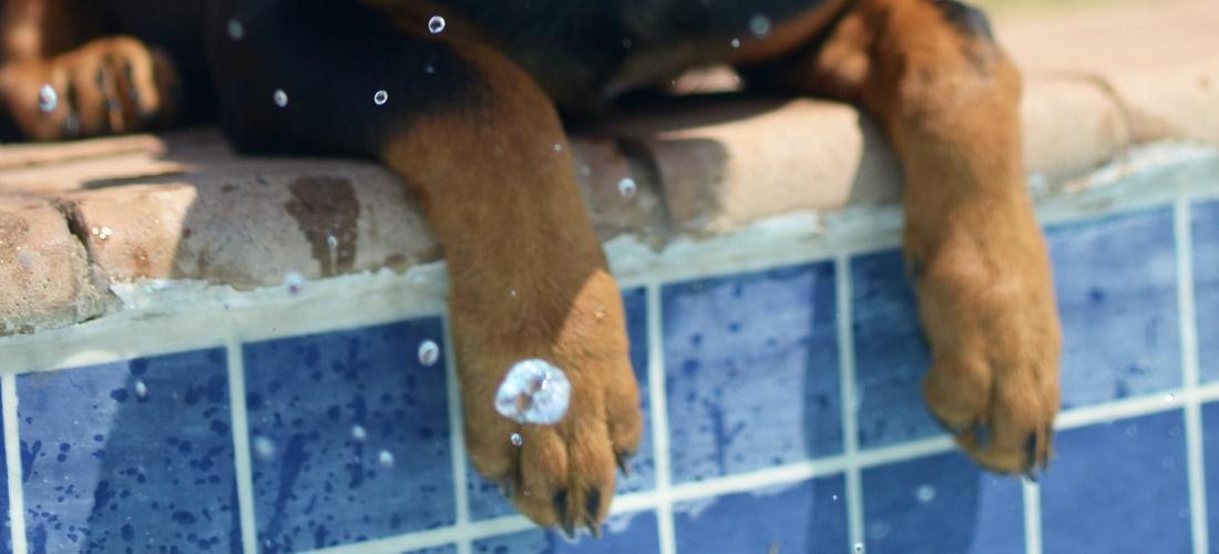 Cuidado de Animales: La Importancia del Cuidado del Perro