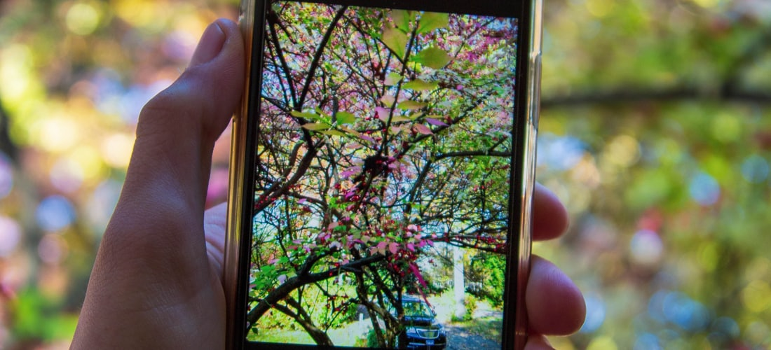 Comunicaciones: ¿Dónde Van a Parar los Teléfonos Móviles Que Ya No Utilizamos?