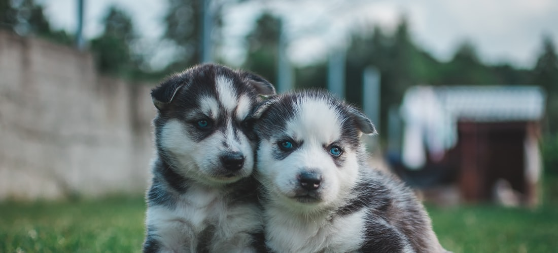 Cuidado de Animales: 3 Beneficios de una Guarderia Canina para Perros