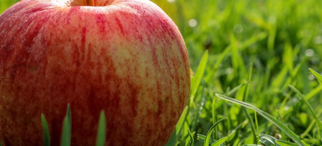 Nutrición: La Dieta de la Manzana para Beneficiar su Salud