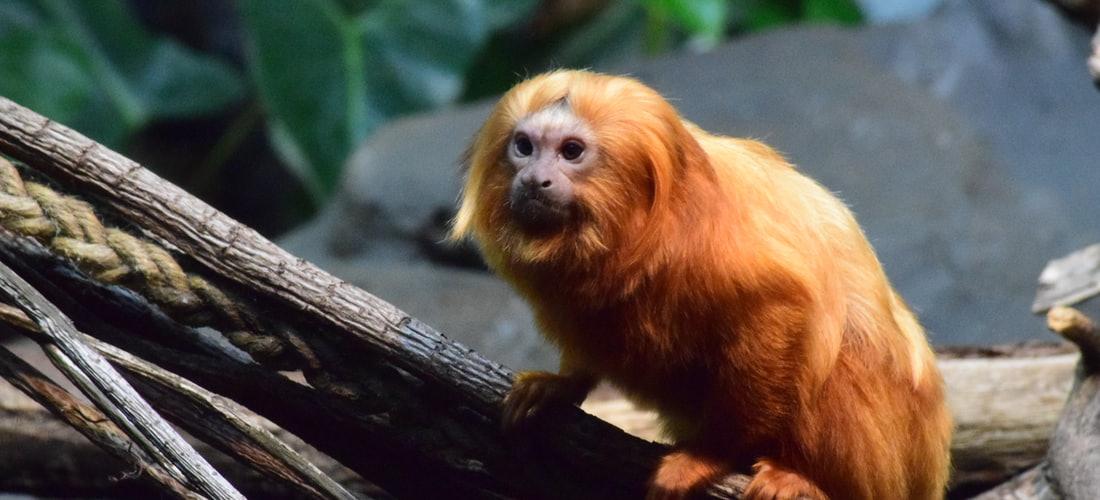 Biología Veterinaria: La Importancia de Tener un Proyecto de Núcleo Zoológico