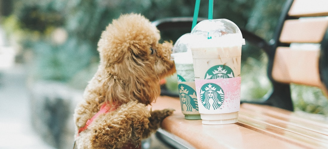 Cuidado de Animales: Ventajas de las Escuelas de Adiestramiento para Perros