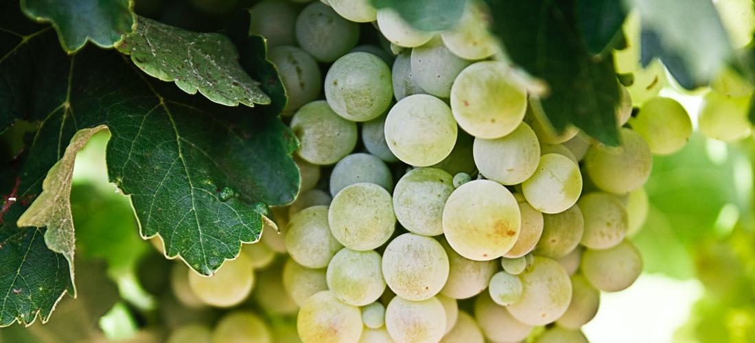 Nutrición: Maridaje de Vinos y Platillos