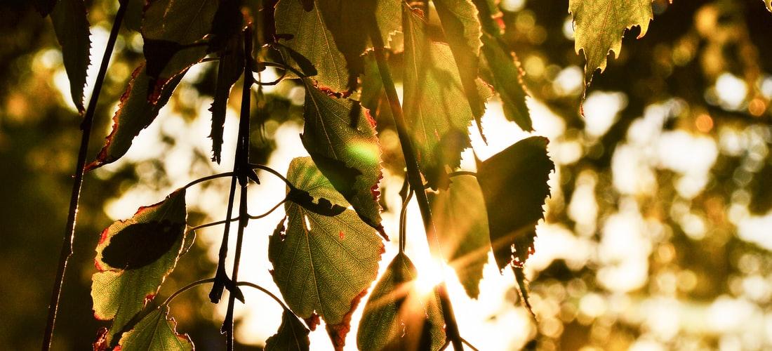 Estética: Varices Tratamiento: Elevar las Piernas Puede Ayudar a Curar las Varices?