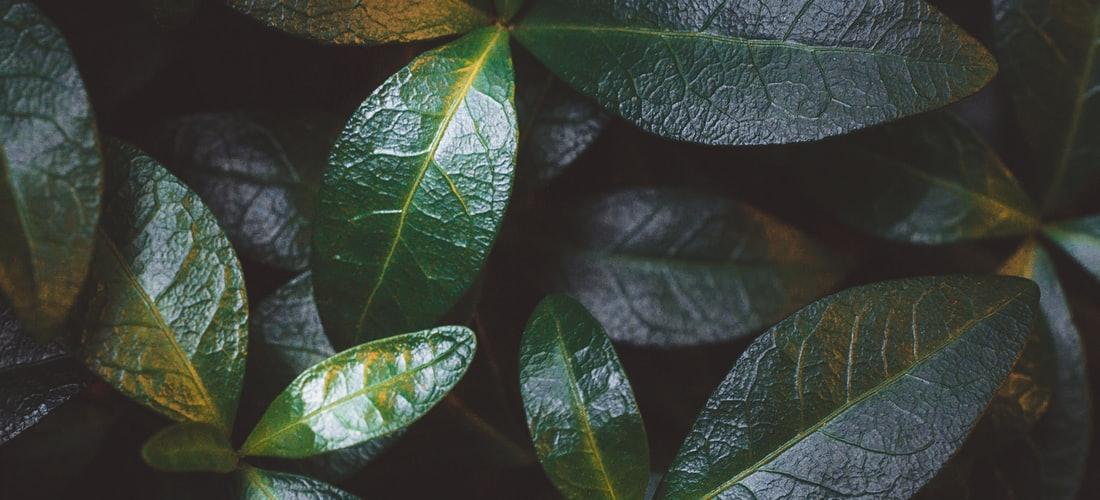 Estética: Remedios Naturales para Eliminar Venas Varicosas