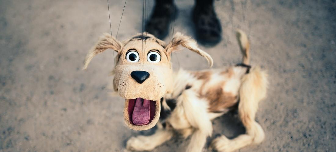 Cuidado de Animales: Tips para Cuidar a tu Perro Cuando Hace Calor