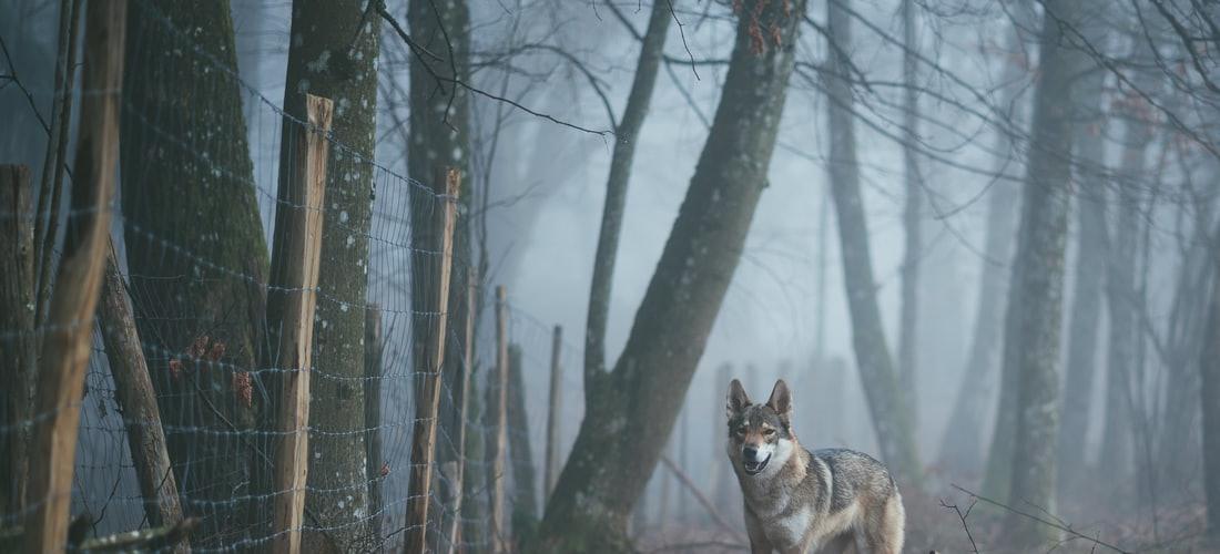 Economía Familiar: Las Guarderías para Perros en Madrid, España