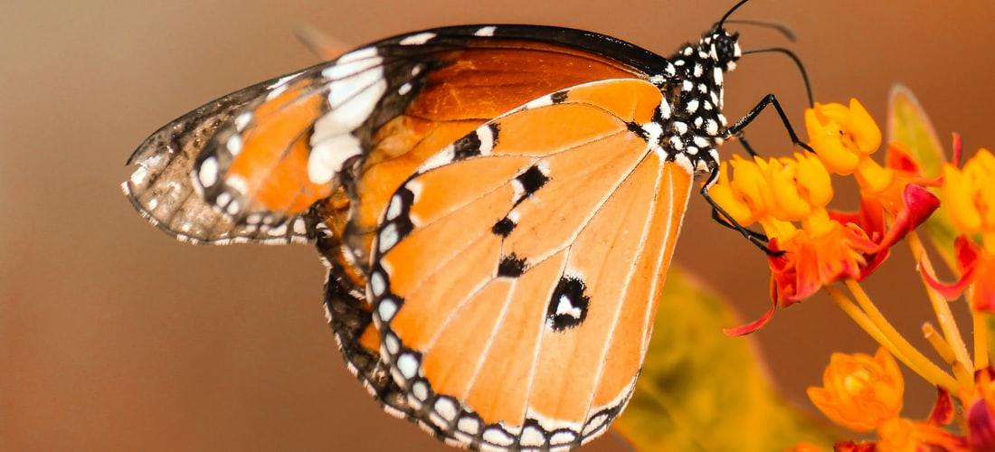 Teatro: Madama Butterfly Vuelve Al Liceo de Barcelona