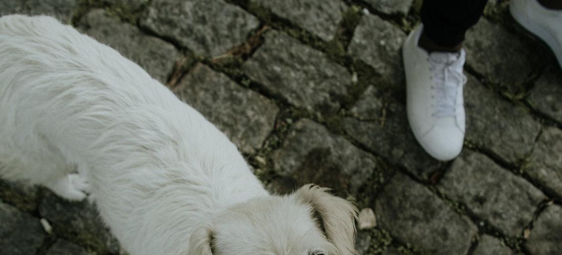 Cuidado de Animales: El Buen Perro: Fiel y Educado