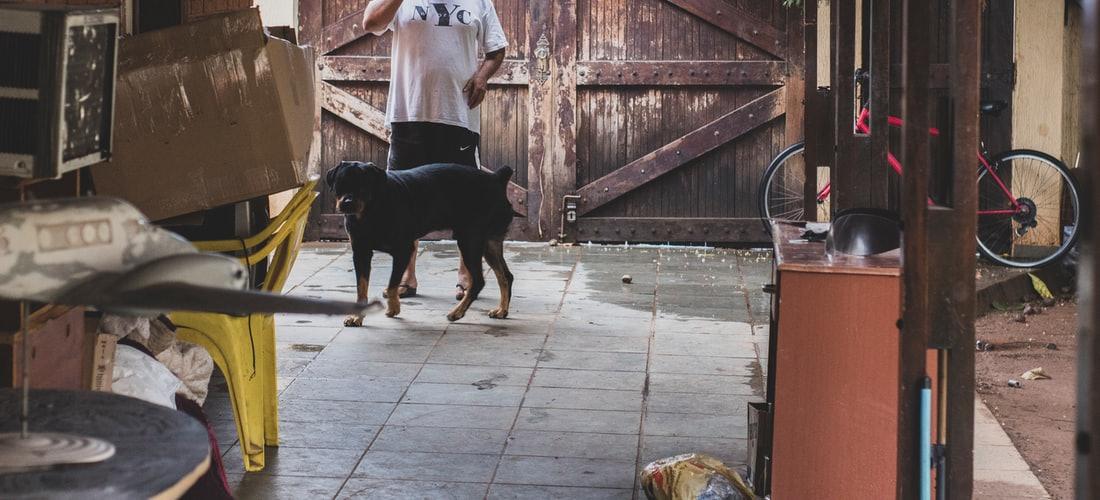 Cuidado de Animales: Lo Mejor de las Residencias para Perros