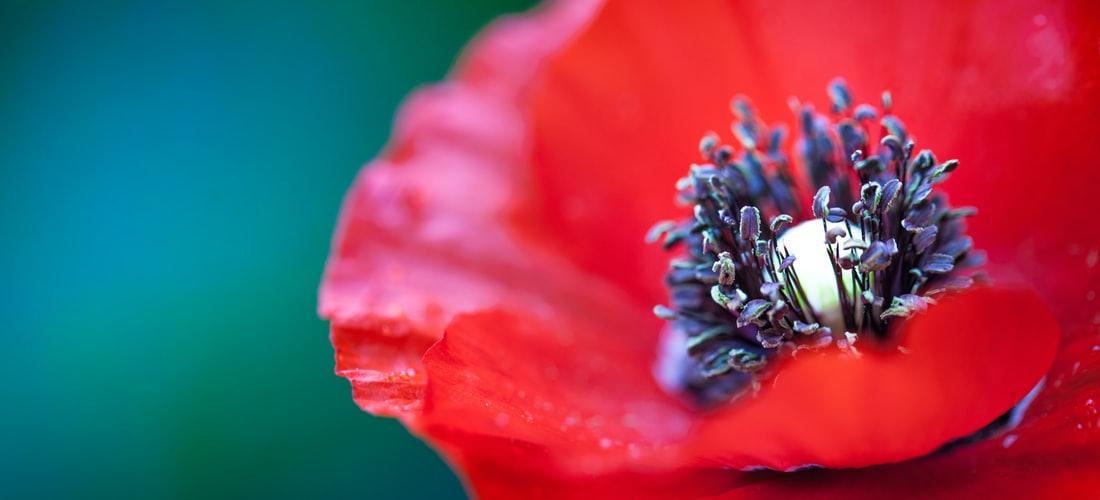Nutrición: Controla los Nervios Con Hierbas y Flores