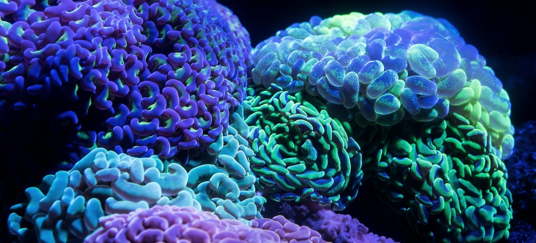 Psicología: Adiciones y la Química Cerebral