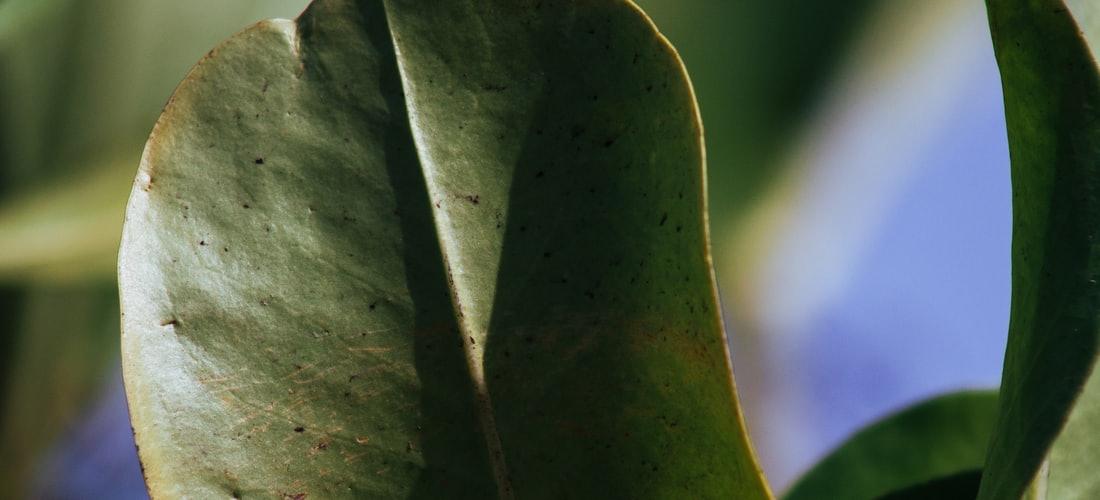 Enfermedades: Como Eliminar las Venas Varicosas y Arañitas de los Pies